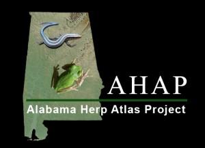 AHAP Logo Black