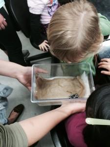Child Looking at Marbled Salamander