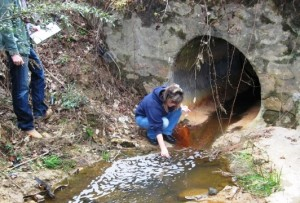 Lisa monitoring E. coli levels in a local tributary in Smiths