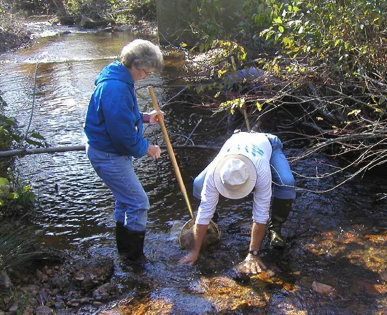 Mary Ann and Dick conducting a stream bioassessment in a tributary of Lake Martin.