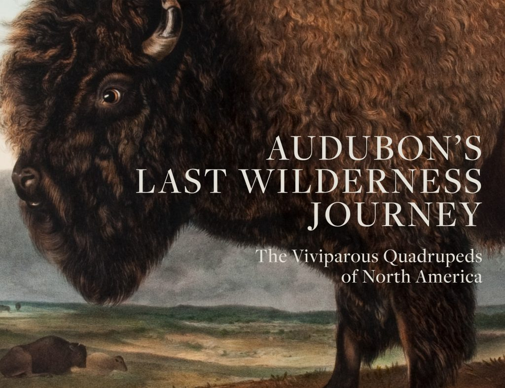 Book cover of Audubon's Last Wilderness Journey, featuring a Buffalo