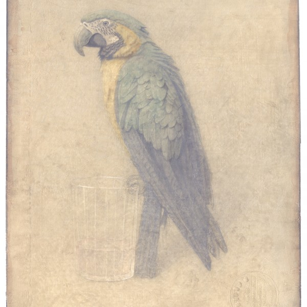 Victor Koulbak Parrot, 1998 Silverpoint, watercolor 12.5 x 10