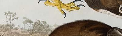 audubon_landscape_banner