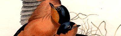 audubon_octavo_banner