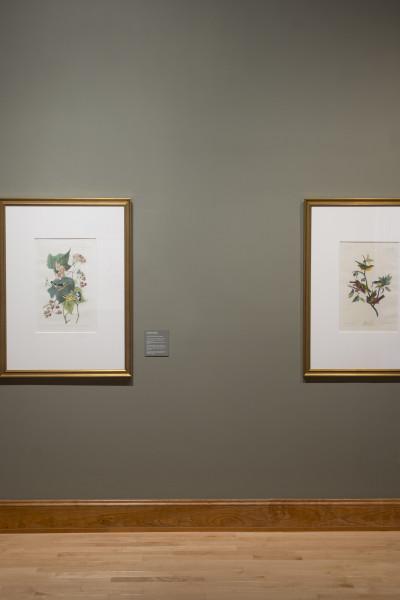 2014_Audubon Galleries