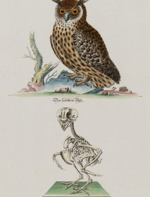 Johann Daniel Meyer Der Uhu (Eagle Owl and skeleton), n.d. Etching with hand coloring 2013.18.15