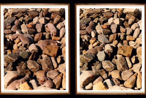 Two photographs side-by-side of puppies camouflaged by rocks.