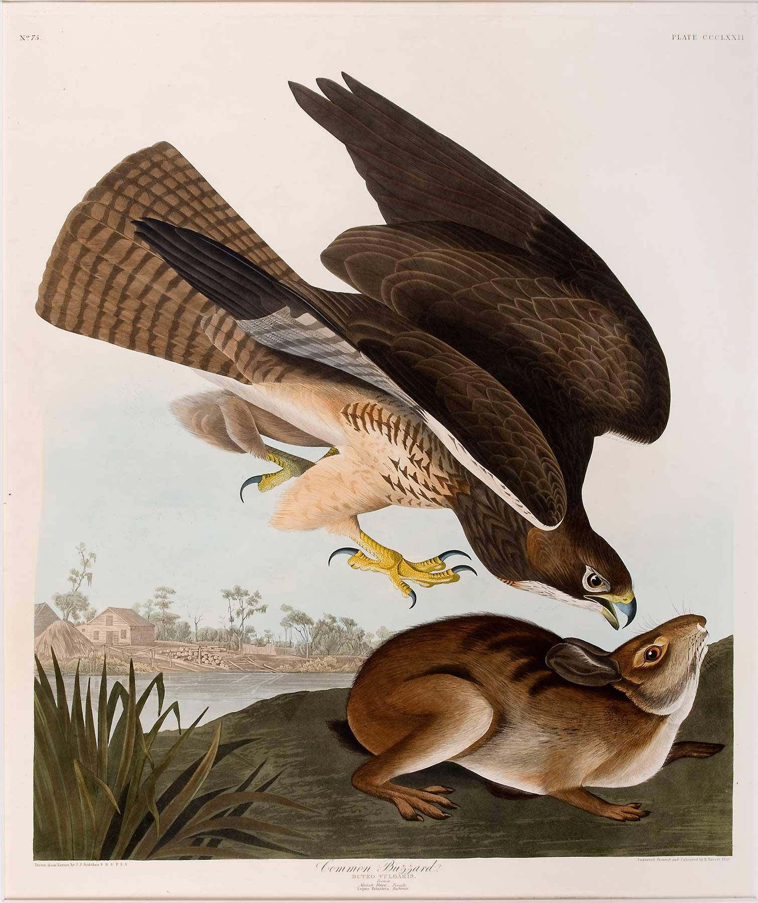 Collection Spotlight: John James Audubon